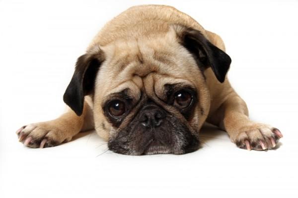 Czasami lęki u psa są wynikiem niedostatecznej socjalizacji.